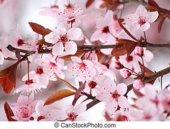pink blossom on tree at spring