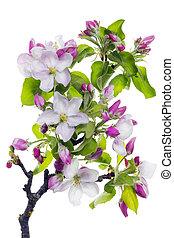 Pink blossom tree branch - Pink blossom spring tree branch...