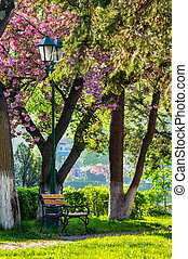 pink blossomed sakura tree near the bench and lantern -...