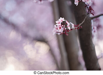 pink blossoms with blurred background