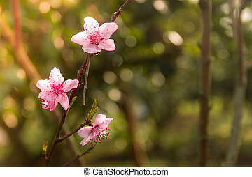 Pink blossoms with blurred soft green background.