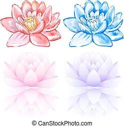 Pink & blue lotus