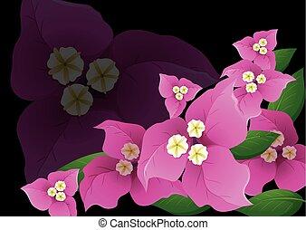 Pink bougainvillea flowers on black background illustration