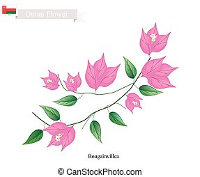 Illustration of Pink Bougainvillea Flowers or Paper Flowers. One of The Most Popular Flower in Oman.