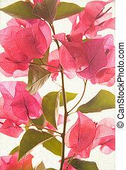 Pink bougainvillea textured art background