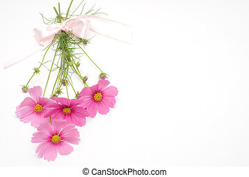 Pink bouquet - Pink cosmos bouquet isolated on white ...