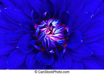 pink., bouwterrein, goed, zijn, blauwe , macro., closeup., dahlia, designers., ook, gebruikt, groenteblik, ontwerp, bloem, printing.