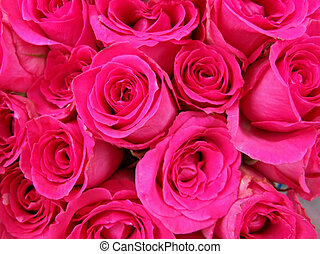 Bunch of vibrant pink rose buds background