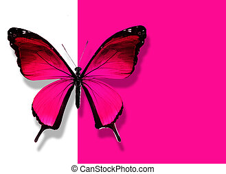 Pink butterfly flying on white pink background