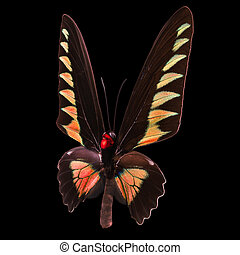 Pink butterfly isolated on a black background - Pink ue ...