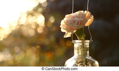 Pink carnation in a vase on a sunset background.