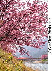 Kawazu cherry tree