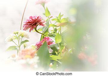 Pink chrysanthemum flower.