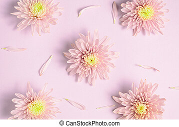 Pink chrysanthemums arrangement on pink background. Flat lay, top view. Floral background.