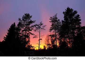 Pink clouds and sunset above the silhouettes of trees.
