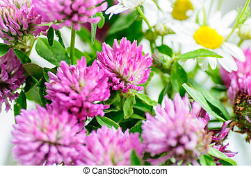 pink Clover Flowers in bouquet. Close up