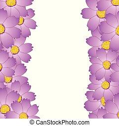 Pink Cosmos Flower Border