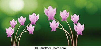 Pink cyclamen flowers on green background