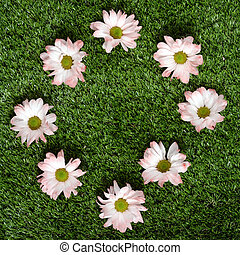 Pink daisy flower on green lawn