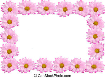 Pink daisy frame or border