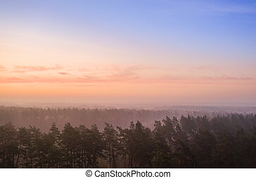 Pink dawn pine over forest drone view