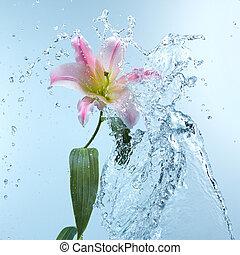 Pink day lily in cool splashing water spraying water...