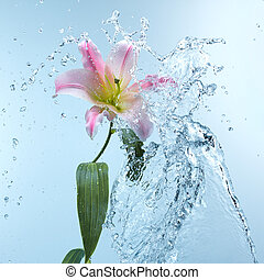 Pink day lily in cool splashing water spraying water...