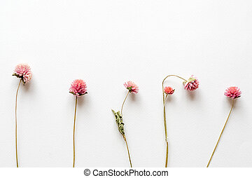 Pink dried flowers on white paper background. Romantic flowers. Top view, flat lay.