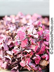 Pink dried hydrangea