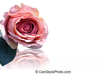 Pink fabric rose isolated on white background