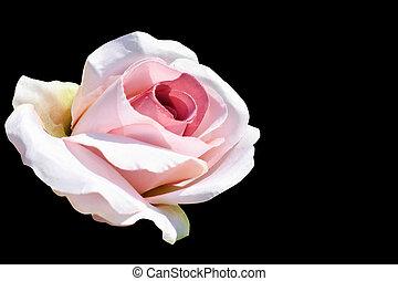 Pink fabric rose on black background