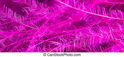 Pink feather as an abstract background