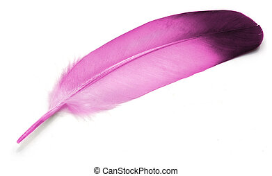 Feather  - Pink Feather of pigeon over white background.