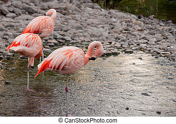 Pink Flamencos in Island of Bahrain