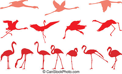 Pink flamingo, a set of vectors