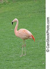 Pink Flamingo Bird on the Floor