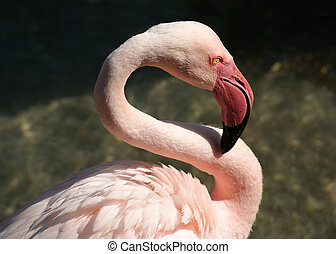 Pink Flamingo in the Wild