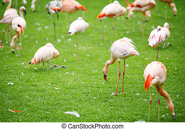 Pink flamingo on a green lawn