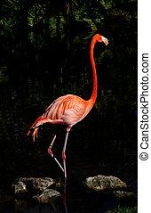 Pink flamingo posing