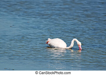 flamingo sitting in the water