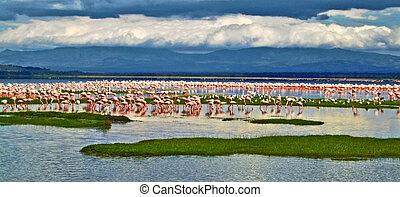 pink flamingos at the Lake in Kenya