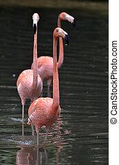 Pink flamingos in the lake