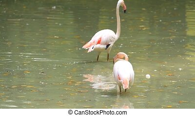Pink flamingos on the pond