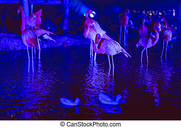 Pink flamingos standing by a lake in a bleu illuminated park