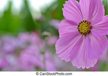 pink flower 2