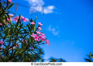 Pink flower and blue sky.