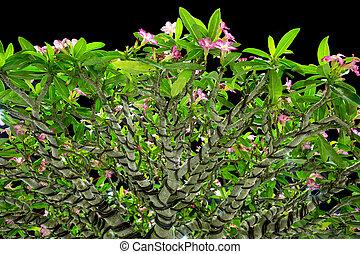 Pink flower bonsai in the garden