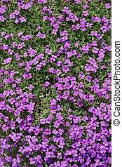 Pink flower bunch