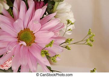 Pink flower close up ontop of cloth