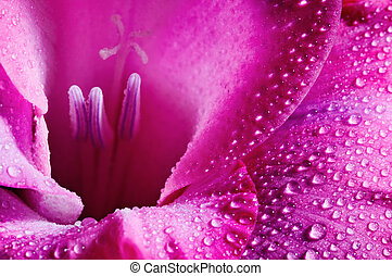 Pink flower - Closeup of pink flower with water drops